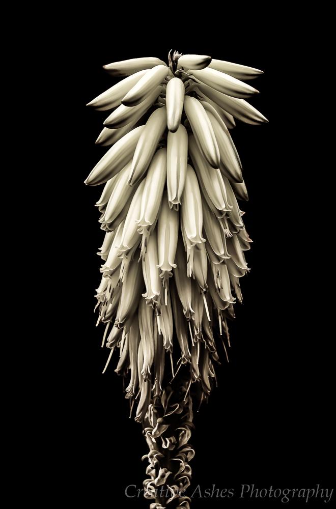 Floral-portait-2.jpg